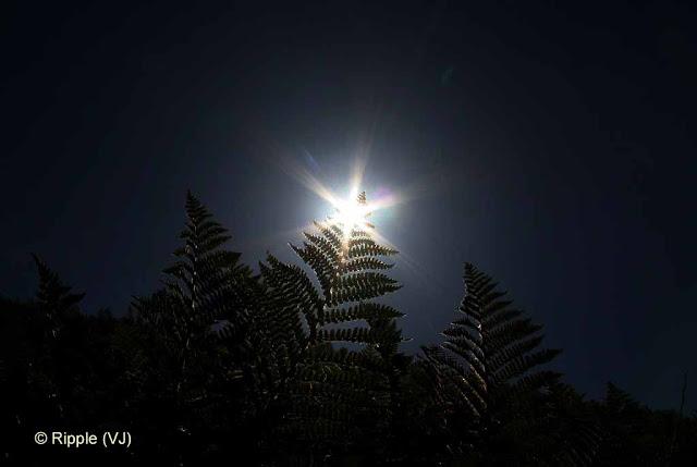 Shrikhand Mahadev: (Kaali Ghati) Shrikhand Mahadev: Sunlight passing symmetrically through leaves