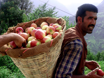 Posted by Ripple (VJ) : Worker with Apples near Nirmand @ Shrikhand Mahadev