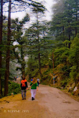 Posted by Ripple (VJ) on PHOTO JOURNEY @ www.travellingcamera.com : A Random Journey to Mcleodganj with my Travelling Camera: ripple, Vijay Kumar Sharma, ripple4photography, Frozen Moments, photographs, Photography, ripple (VJ), VJ, Ripple (VJ) Photography, Capture Present for Future, Freeze Present for Future, ripple (VJ) Photographs , VJ Photographs, Ripple (VJ) Photography : Tourism is an important industry in McLeodganj, but many tourists come here to study Tibetan Buddhism, culture, crafts, Yoga, Meditaion etc. The town is also known for Tibetan handicrafts, thangkas, Tibetan carpets, garments and other souveni: Road towards Bhagsunag... @ Upper Dharmshala, Himachal Pradesh.BHagsunag is small place near Mcleodganj which is approximately 2 km from Mcleodganj and can be approached through road on feet... Vehicles can also go till BHagsunag Temple... There is a Shiva Temple at BHagsunag and fresh water springs which is considered as holy place to take bath...