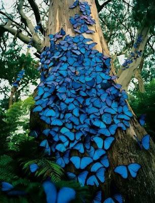 FINALIZANDO EL AÑO 2009 Mariposas+azules