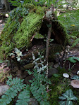 Fairy house at Northcroft