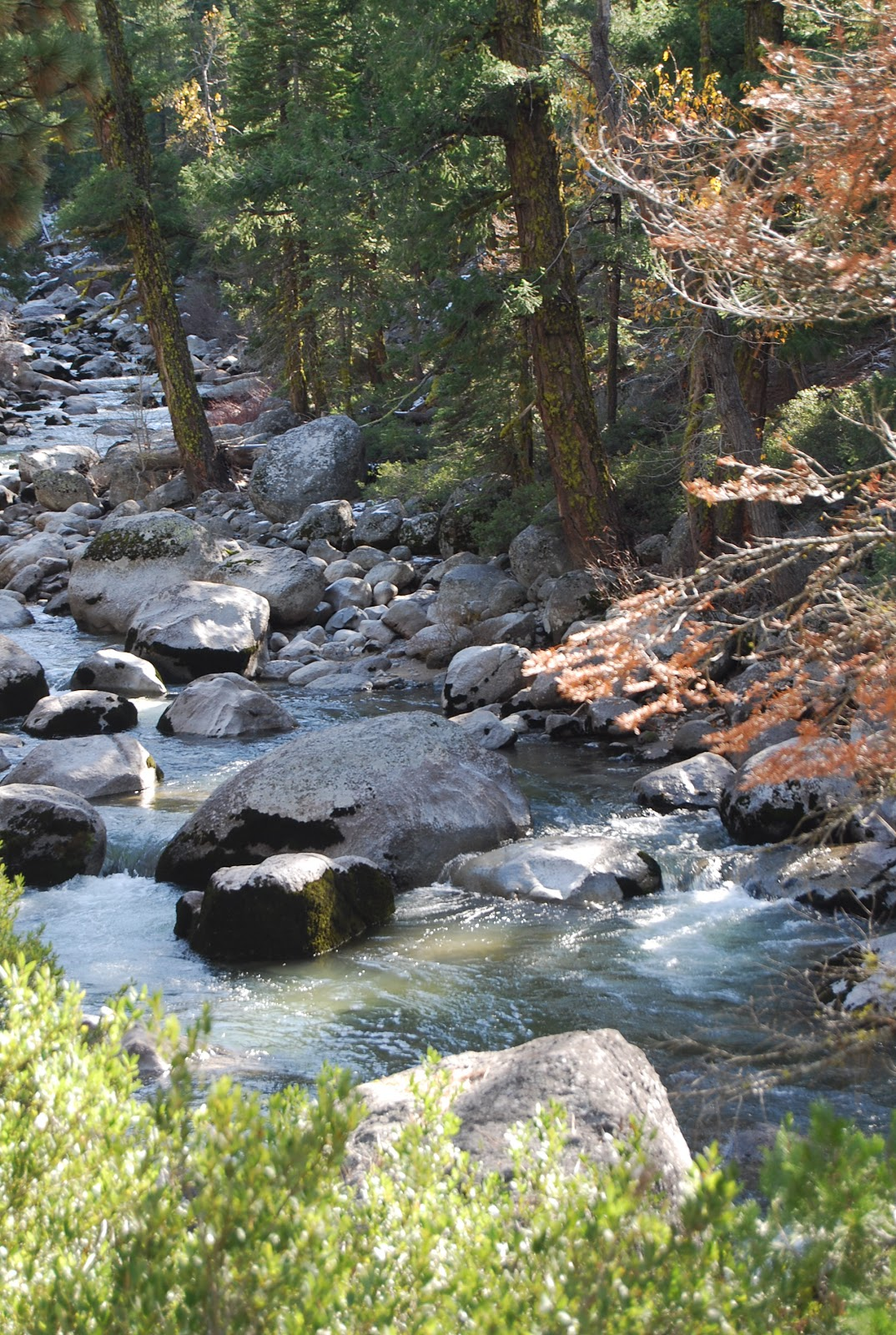 Mumzie 39 s country place trout fishing in the sierra snow for Stanislaus river fishing