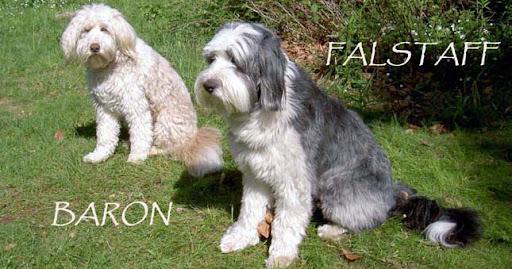 Baron och Falstaff