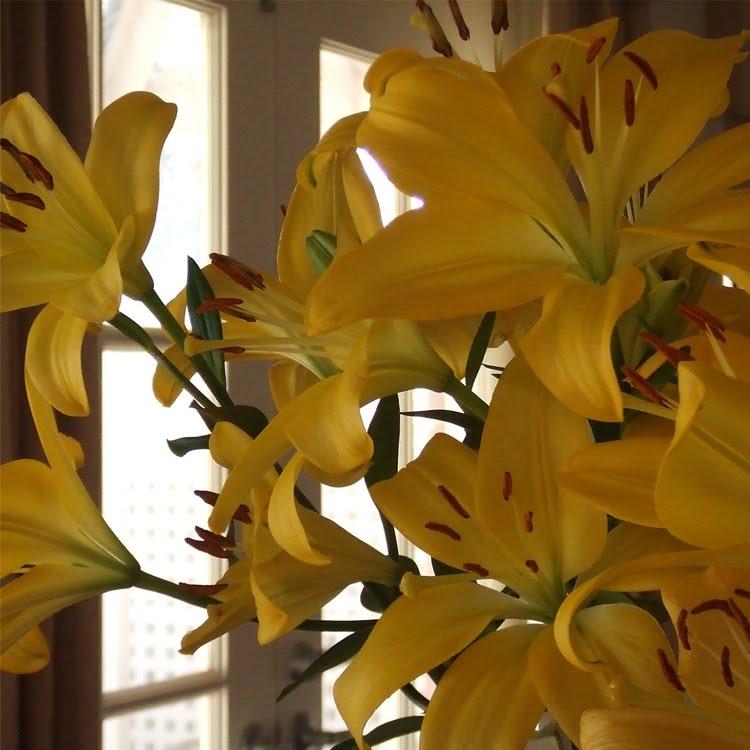 [yellow-flowers-2.jpg]