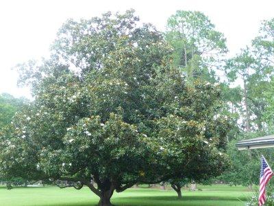 [tree1]
