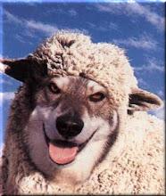 O Lobo em pele de cordeiro!!