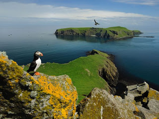 puffin shiant islands best nature wildlife