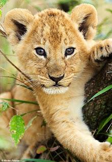 Bostwana|Africa|zoo|zoological|news|best