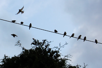 Birds sitting on wire overhead.