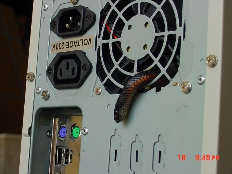 Technology, Enjoy: Snake In SMPS ( CPU )