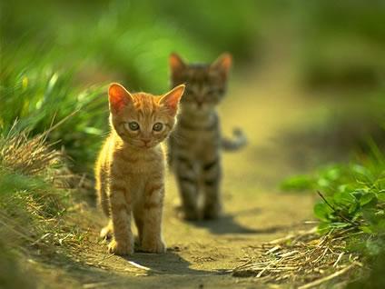 Gatos animados con movimiento - Imagui