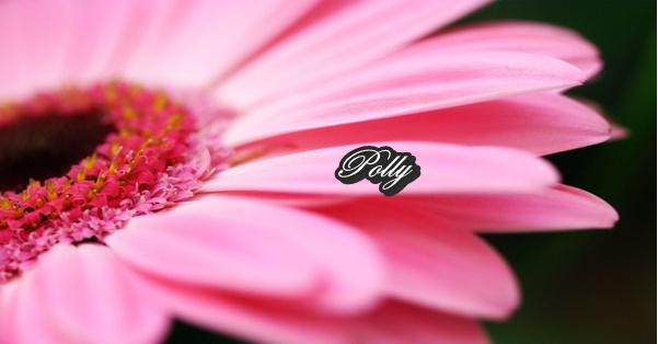 Polly ***