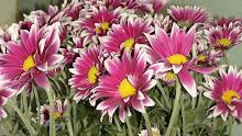 Carinho em flores!