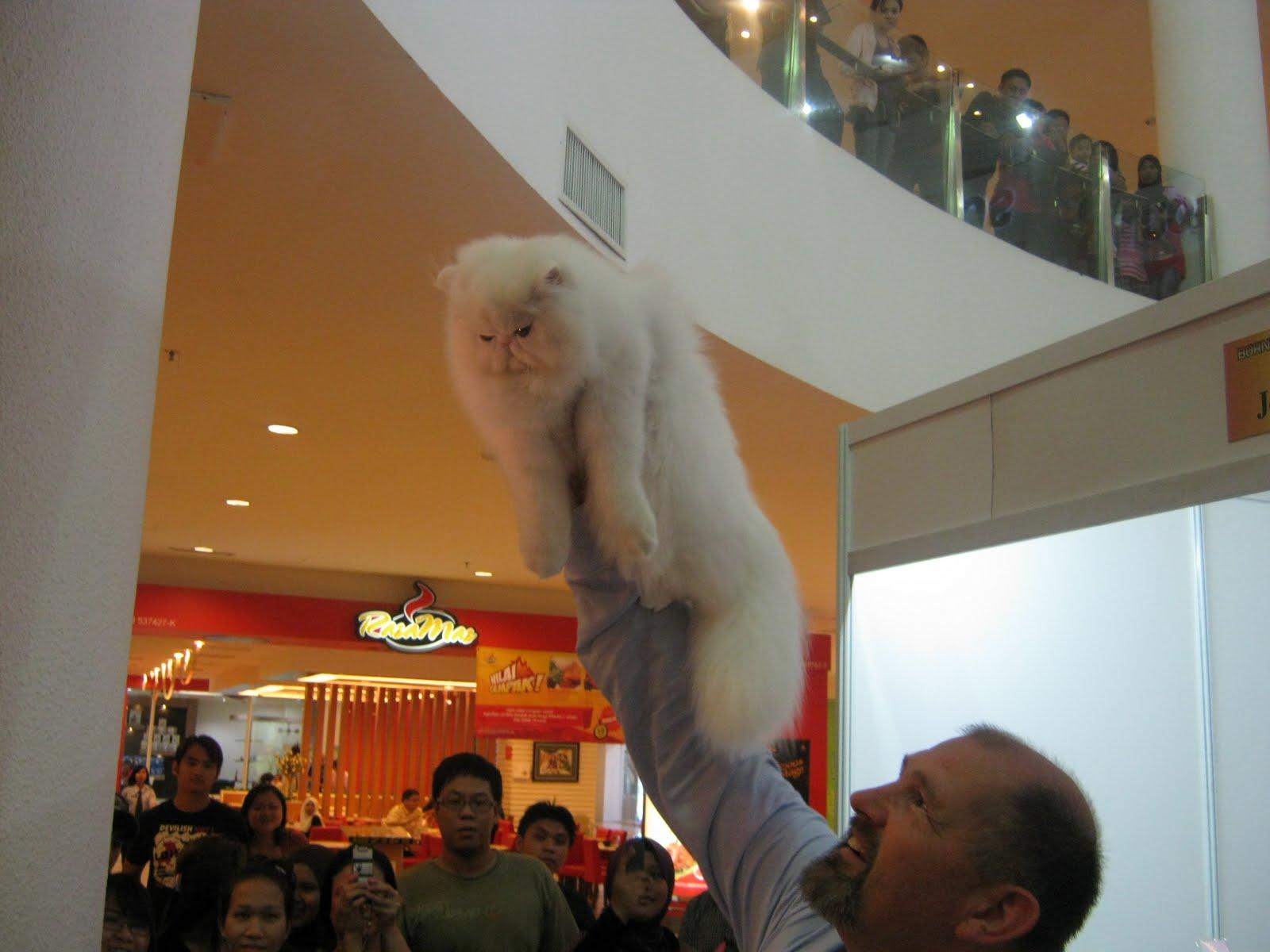 Kucing Putih Comel