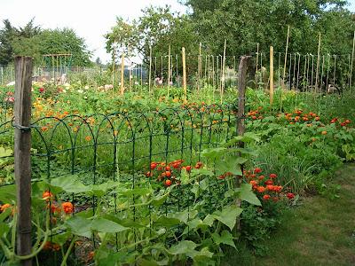 La culture associ e au sein d 39 un potager bio un jardin bio for Au jardin potager