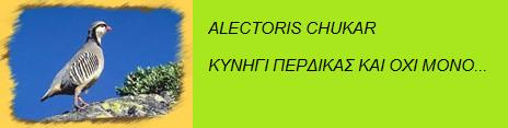 ALECTORIS CHUKAR