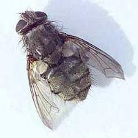 Get rid of buzzing in ear 05