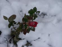 Winter Storm December 12, 2010