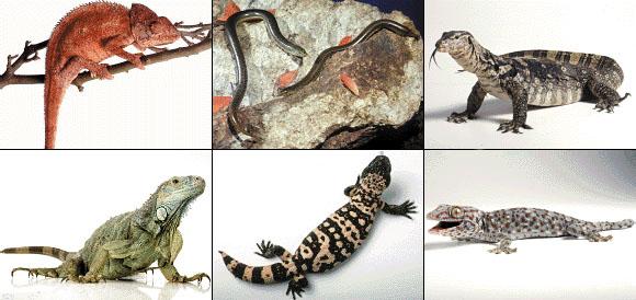 La Evolución de los Animales Vertebrados: noviembre 2007
