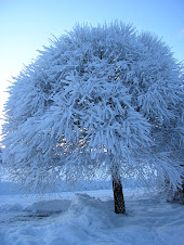 Snö klädd Pil