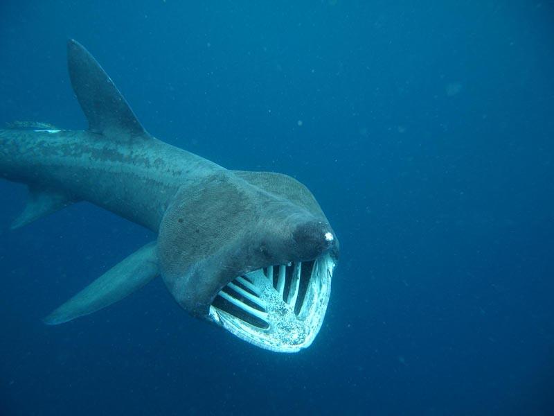 Marella giovannelli prima le balenottere poi il bagno con gli squali - Bagno con gli squali sudafrica ...