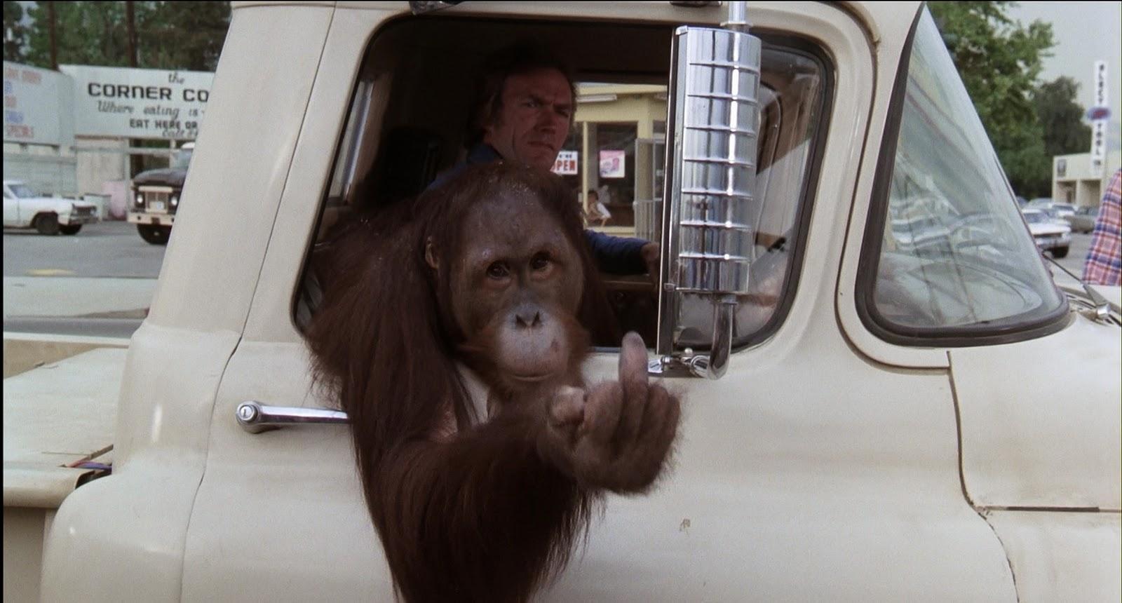 http://3.bp.blogspot.com/_Y5-4Z4aPcOI/TTM6yjE7HwI/AAAAAAAAAHQ/s1aY8Lu3_l8/s1600/funny+monkey.jpg