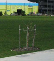 Dead tree at Waitangi Park