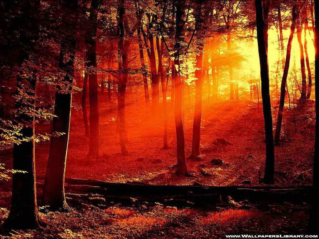 http://3.bp.blogspot.com/_Y5JRoh8Ed84/S_mteD8HZbI/AAAAAAAAAD4/RNVwmKKQ3ls/s1600/forest-sunlight-wallpaper.jpg