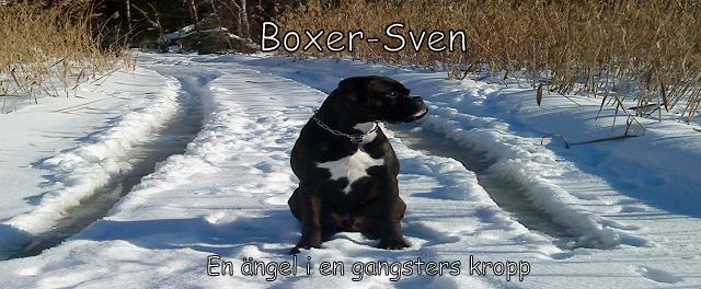 Boxer-Sven