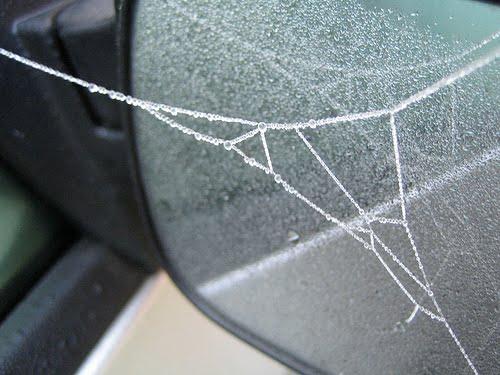 [cobweb.jpg]