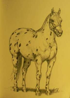 appaloosa for sale in ohio