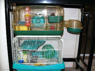 HamsterVille Condo Babies