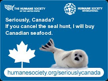 Help Save the Seals