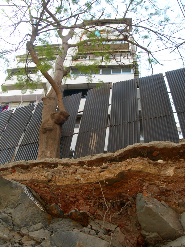 layers of soil and tree roots in mumbai by kunal bhatia