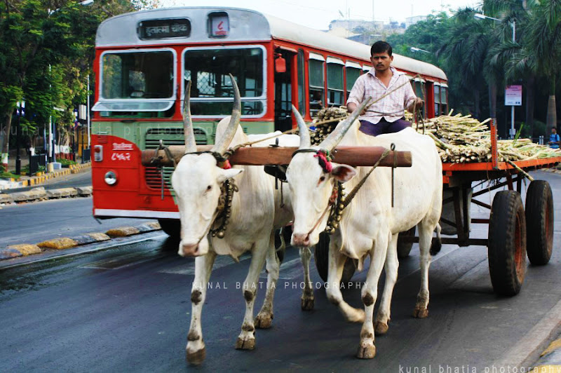 bullock cart and public bus on indian roads mumbai traffic by kunal bhatia