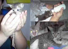 O dia a dia da Proteção Animal.
