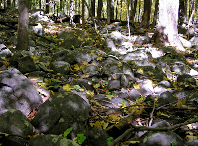 Sourland Mountain Preserve - Hillsborough, NJ