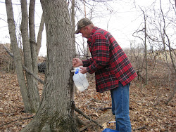 Consider Making Maple Syrup