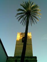 Alminar y palmera. Sevilla