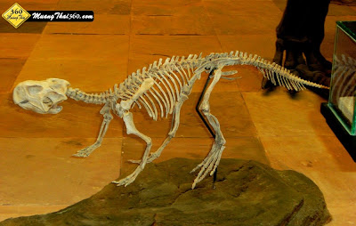 ไดโนเสาร์กาฬสินธุ์