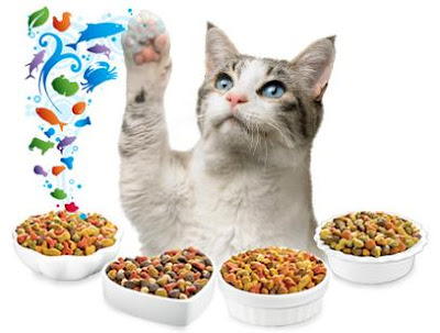 Easy Homemade Formula Recipe for Kittens | eHow.com