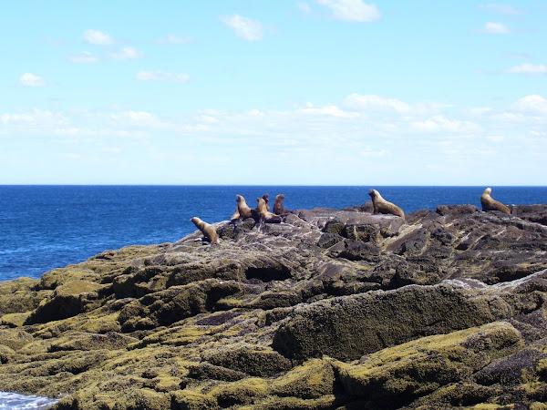 """lobos marinos de Punta Porfido """" Cerro Bellido"""""""