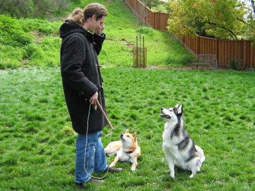 Home dog training wakefield