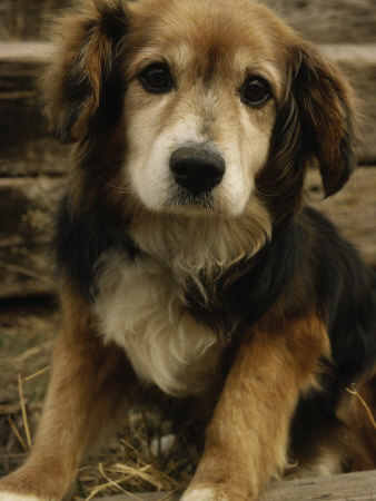 ... Reasons to Choose a Mixed Breed Dog:Pictures of Dogs and All About Dog