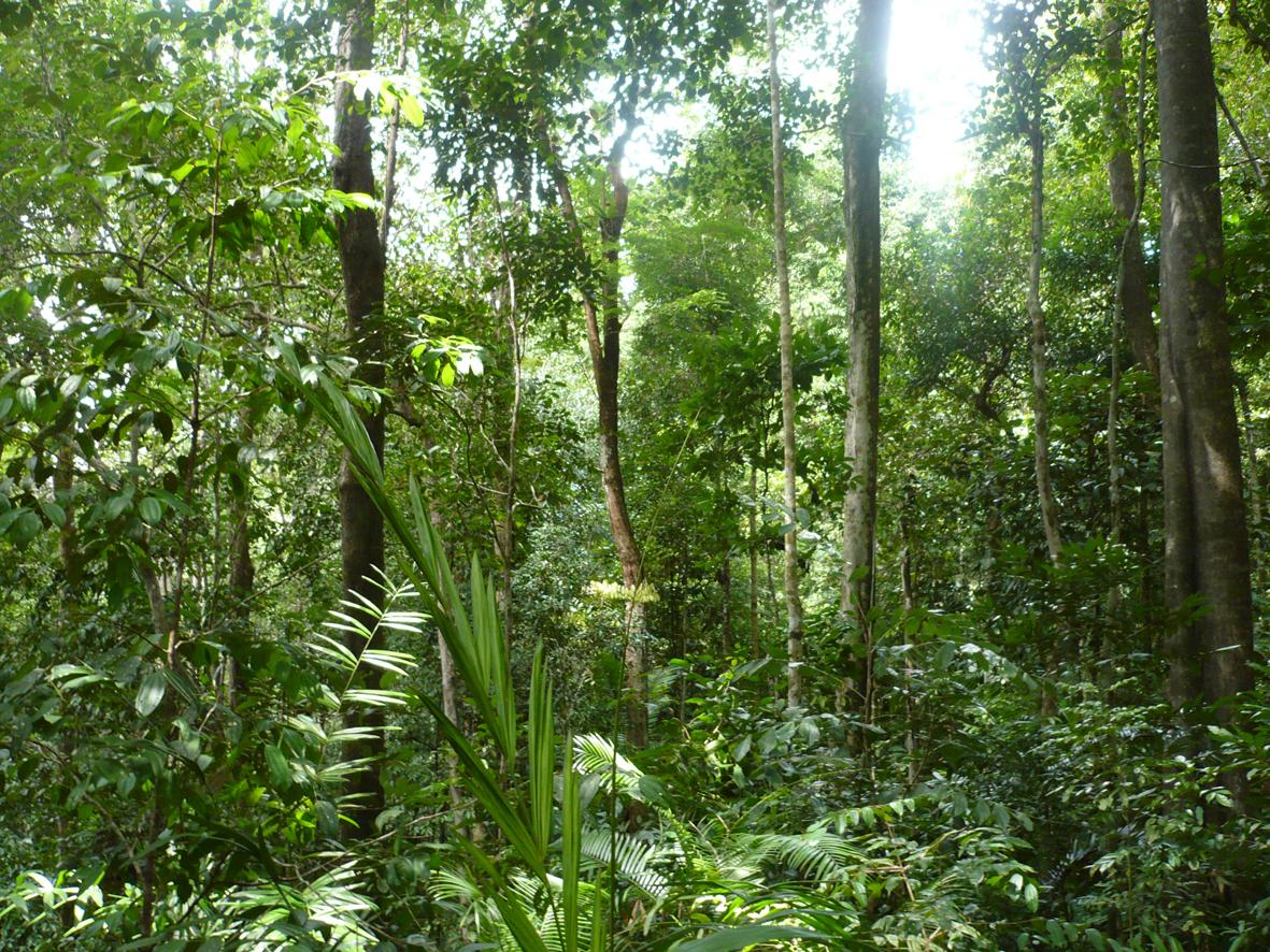 les ibildun trek jungle 224 brunei suite