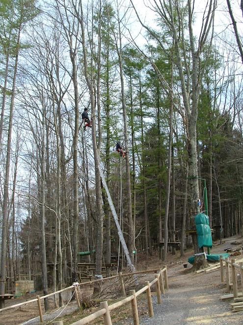 Préparation des arbres supportant l'aire de jeux