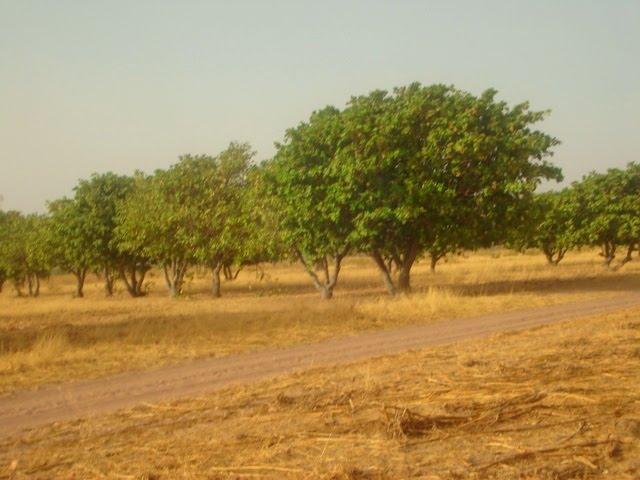 pistes du Laghem en saison séche