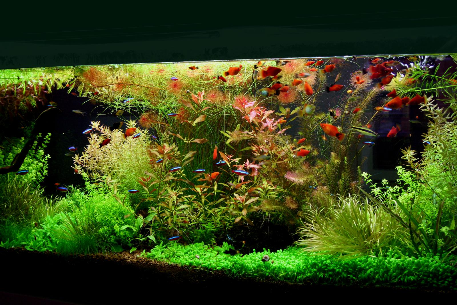 My 600l planted tank large aquariums and ponds for Aquarium 600l