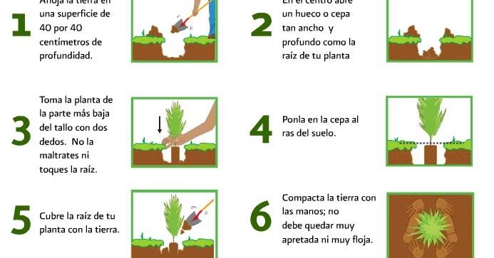 Ceip cruz valero la pera pirata instrucciones para for Pasos para sembrar una planta