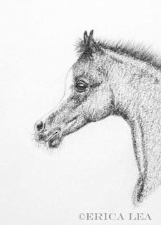 arabian horse foal